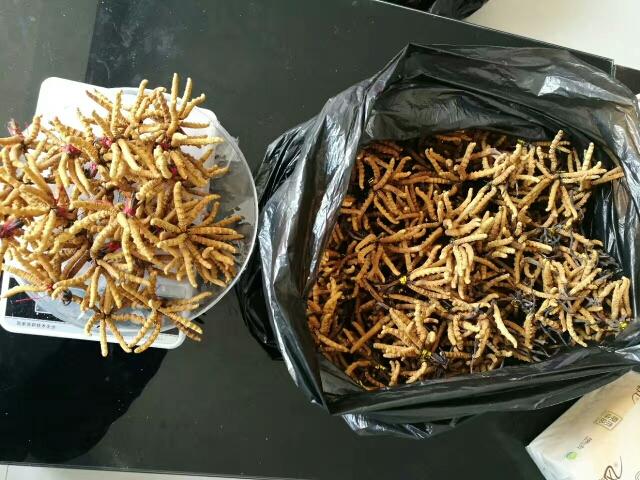 柳州回收冬虫夏草,回收5x极草含片