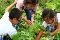 深圳大鹏古城生态园亲子户外拓展组织体验农耕乐趣采摘草莓好去处