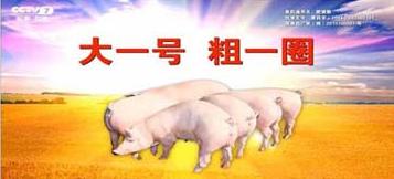 猪吃什么三个月出栏 养猪方法喂什么长得快