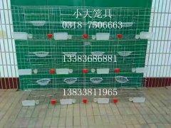 供应养殖设备鸡鸽兔笼狐狸笼鹌鹑笼鸽子笼兔子笼鸡笼貉笼鸟笼狗笼