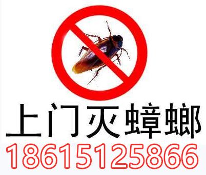 淄博灭蟑螂有效的方法 灭蟑螂公司 淄博震虫
