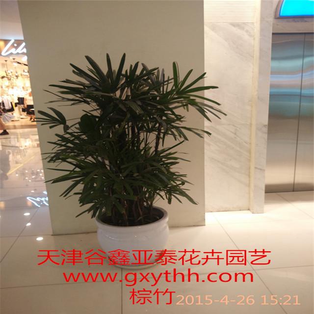 天津花卉租摆公司天津花卉租赁公司天津花卉销售公司